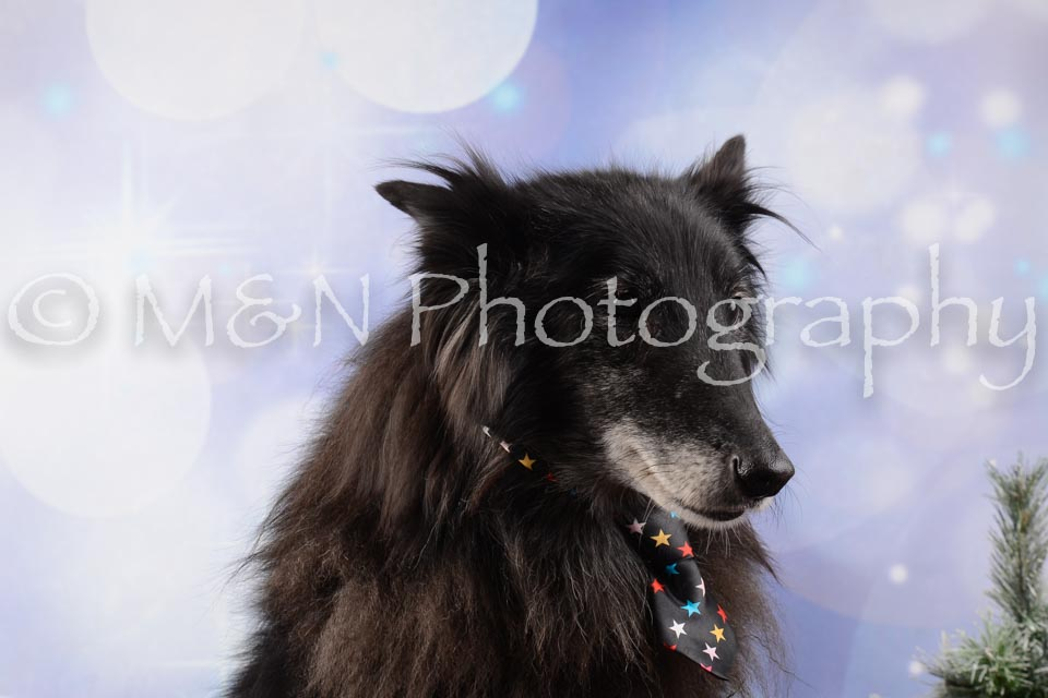 M&N Photography -DSC_6562