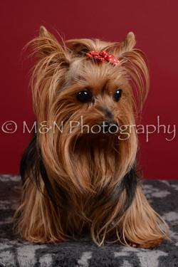 M&N Photography -DSC_3618