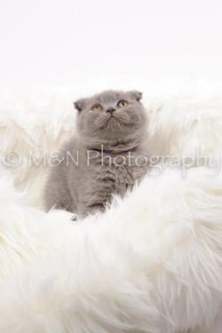 M&N Photography -DSC_8826
