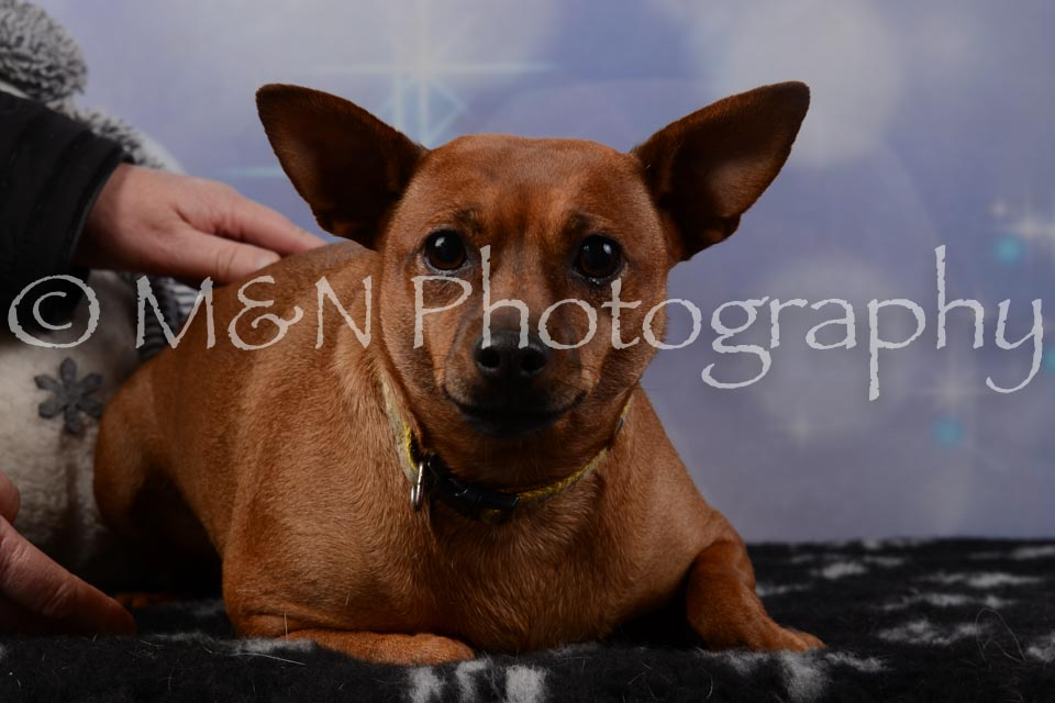 M&N Photography -DSC_6477