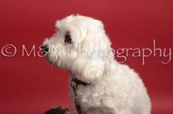 M&N Photography -DSC_8643