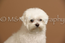 M&N Photography -_SNB0652