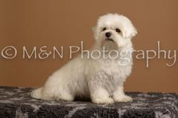 M&N Photography -_SNB0659