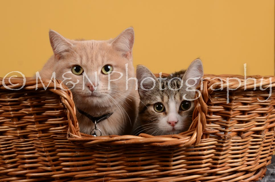 M&N Photography -DSC_4809