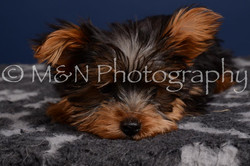 M&N Photography -DSC_4351