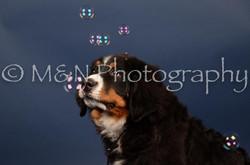 M&N Photography -DSC_3794