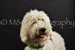 M&N Photography -DSC_2546