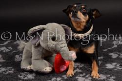 M&N Photography -DSC_9663