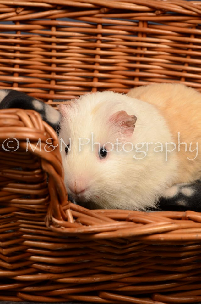 M&N Photography -DSC_4681