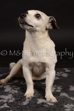 M&N Photography -DSC_0097