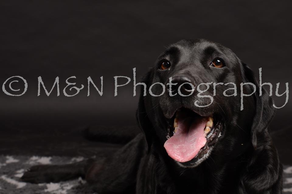 M&N Photography -DSC_0024