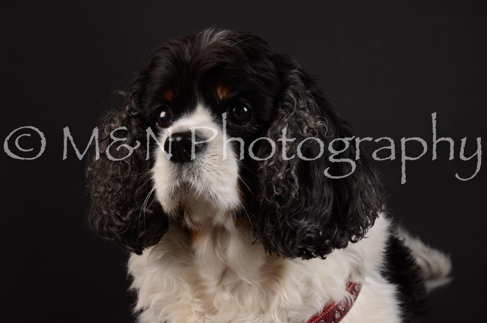 M&N Photography -DSC_5480