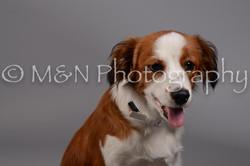 M&N Photography -DSC_1511