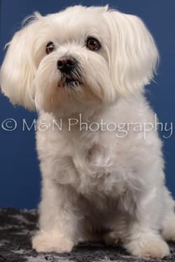 M&N Photography -DSC_5203