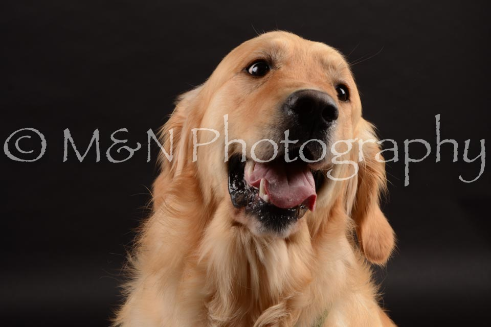 M&N Photography -DSC_9893