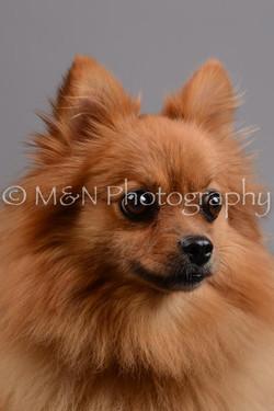 M&N Photography -DSC_2525