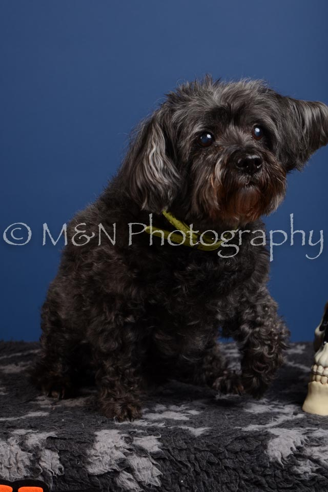 M&N Photography -DSC_5041