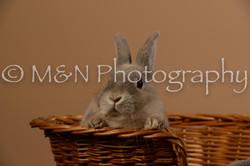 M&N Photography -_SNB0509