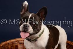 M&N Photography -DSC_0679
