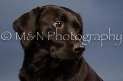 M&N Photography -DSC_4341