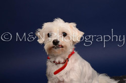 M&N Photography -IMG_4698