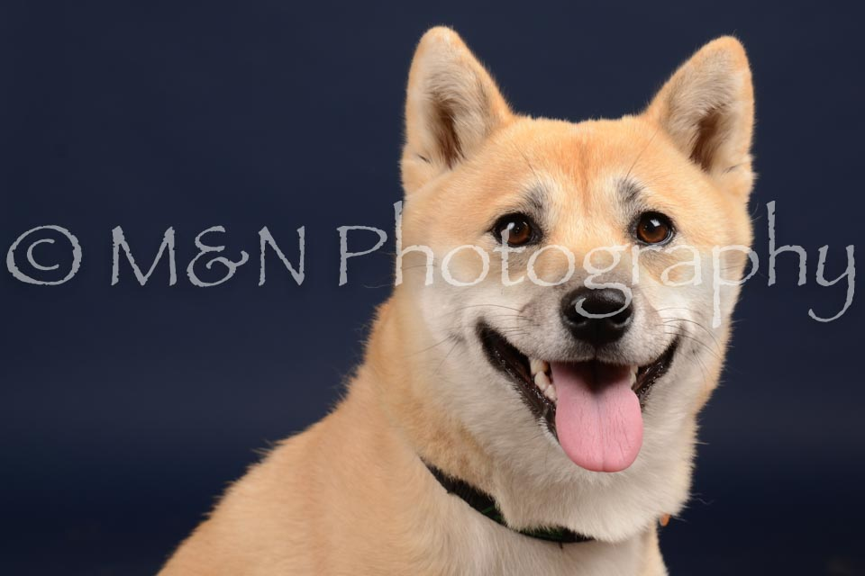 M&N Photography -DSC_0665