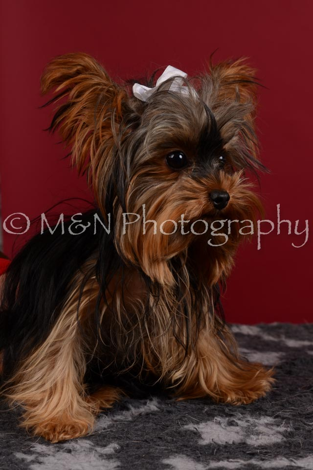 M&N Photography -DSC_3338