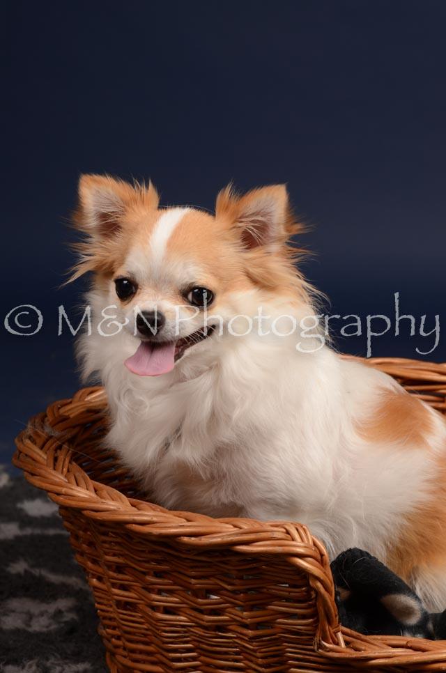 M&N Photography -DSC_0598