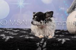M&N Photography -DSC_6593
