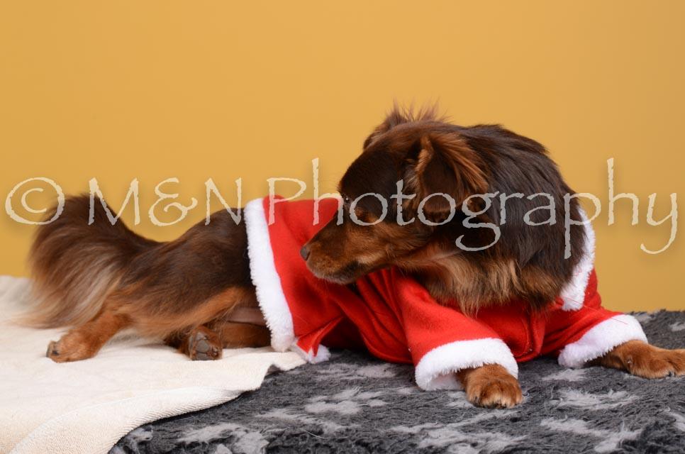 M&N Photography -DSC_4848