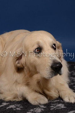 M&N Photography -DSC_5275