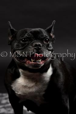 M&N Photography -DSC_2413