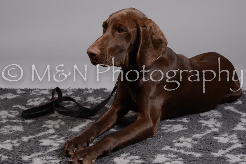 M&N Photography -DSC_2602