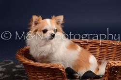 M&N Photography -DSC_0596