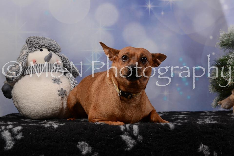 M&N Photography -DSC_6483