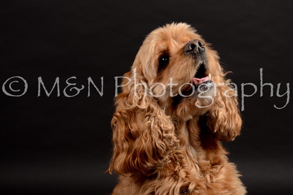 M&N Photography -DSC_9843
