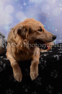 M&N Photography -DSC_6712