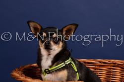 M&N Photography -IMG_4500