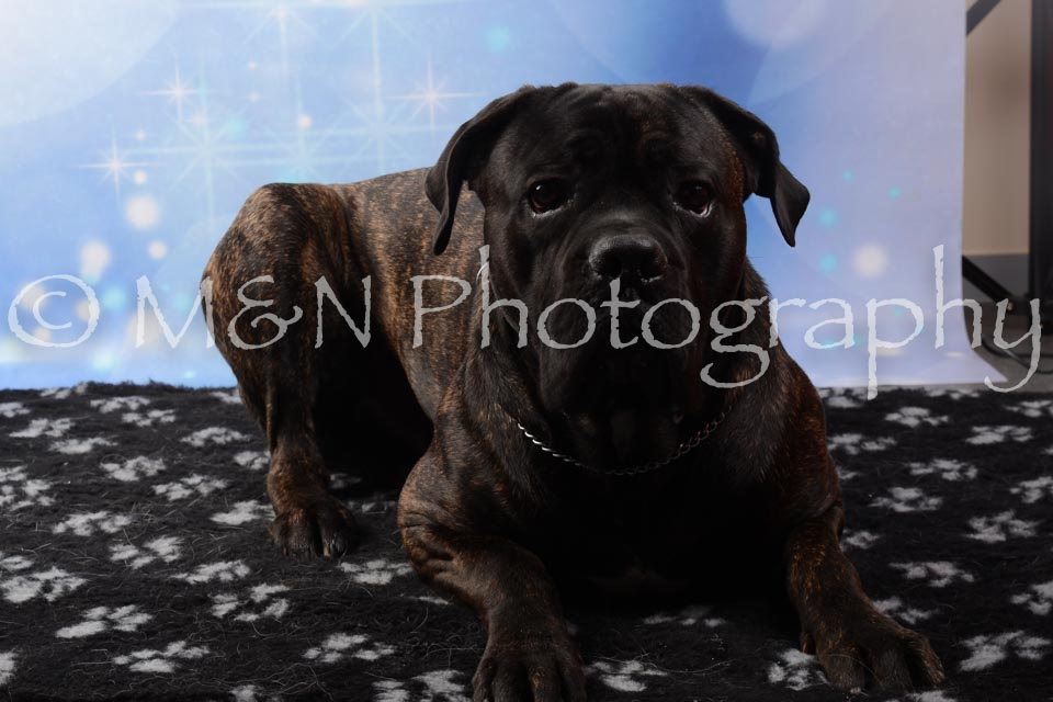 M&N Photography -DSC_6803