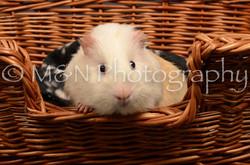 M&N Photography -DSC_4682