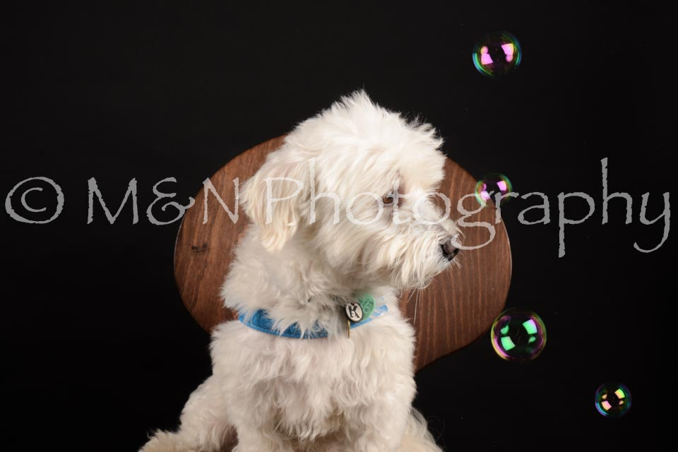 M&N Photography -DSC_9799