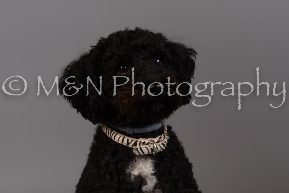 M&N Photography -DSC_2407