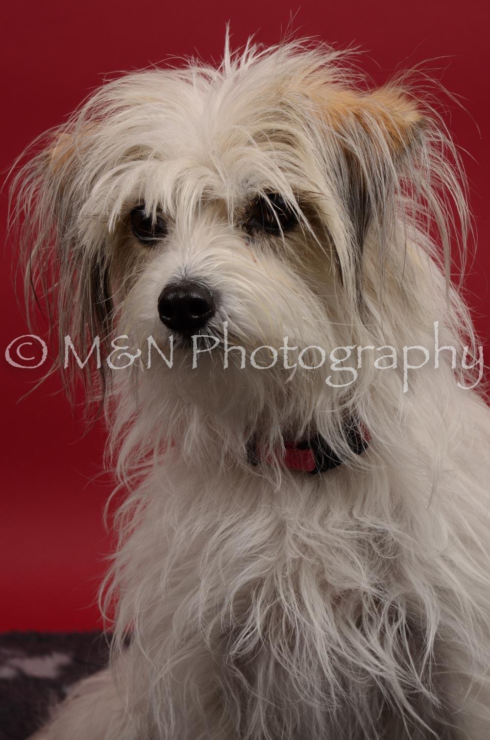 M&N Photography -DSC_8398