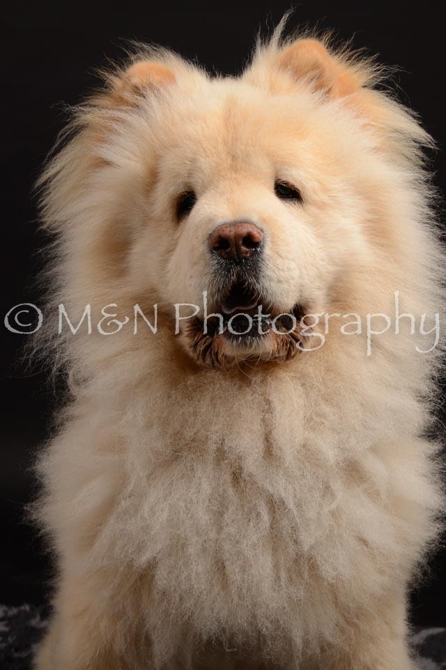 M&N Photography -DSC_9683