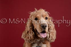 M&N Photography -DSC_3225
