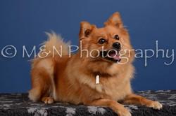M&N Photography -DSC_5376
