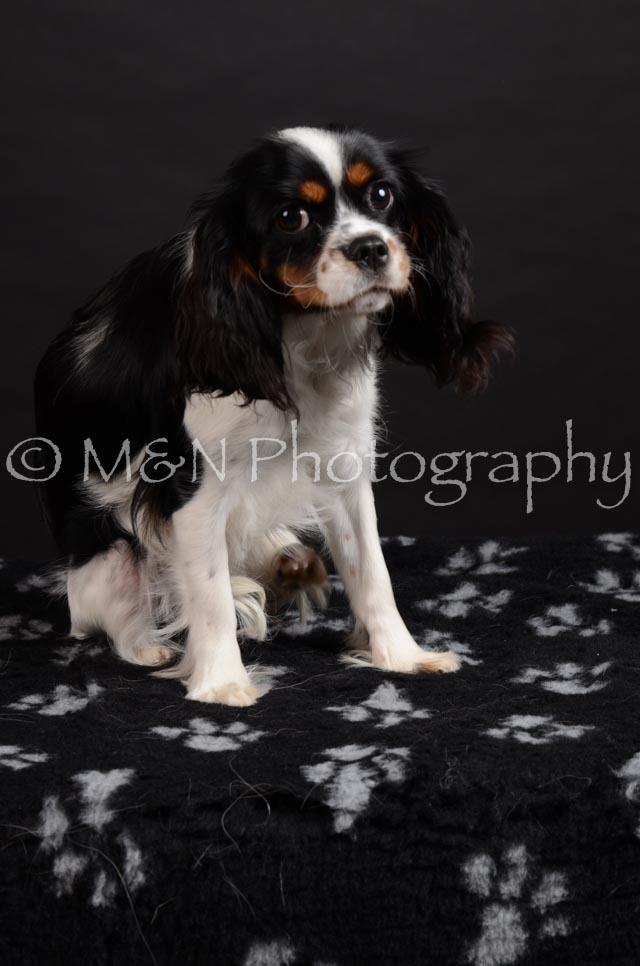 M&N Photography -DSC_5437