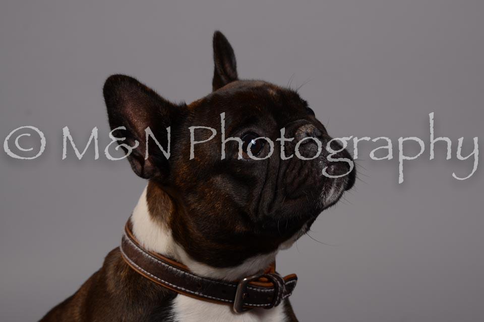 M&N Photography -DSC_2571