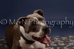 M&N Photography -DSC_0555