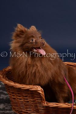 M&N Photography -DSC_0439